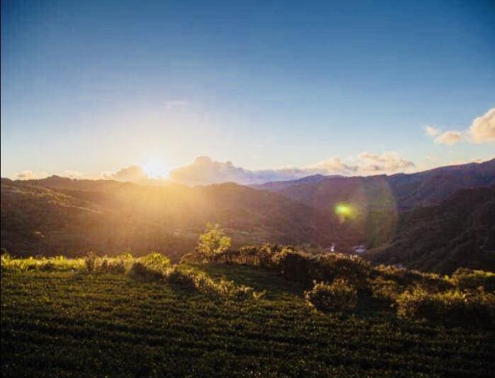 Sunrise Tour Dawn in Tea mountains (half day tour) 1