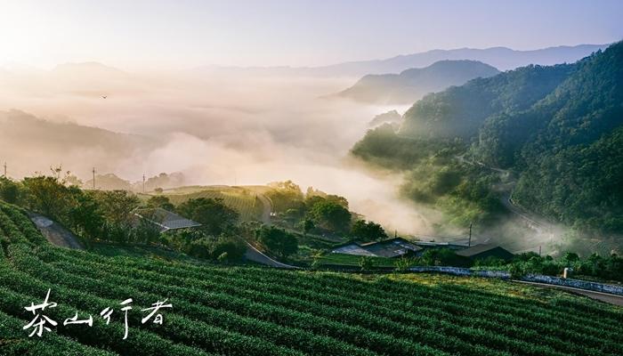 台灣綠 1